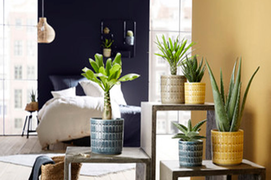 House plants were the top décor trend in 2020